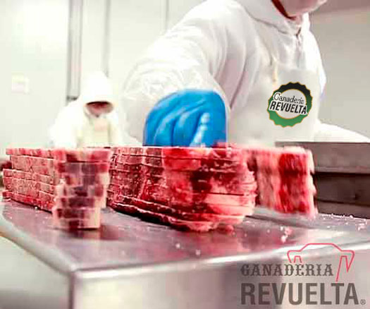 The Best Beef Meat in Mexico | Ganadería Revuelta - The